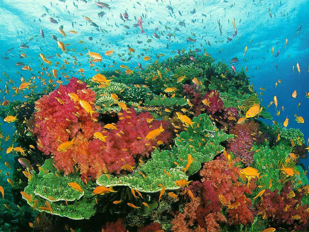 external image coral08.jpg